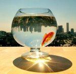 cerita motivasi - ikan kecil dan air