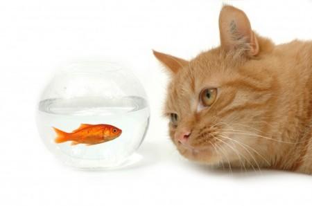 Ikan Kecil dan Air