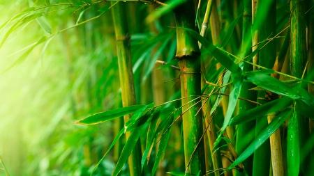 Filosofi Pohon Bambu